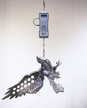 6kg Hawk